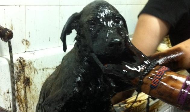 Maltrato animal, una lacra sin el castigo merecido