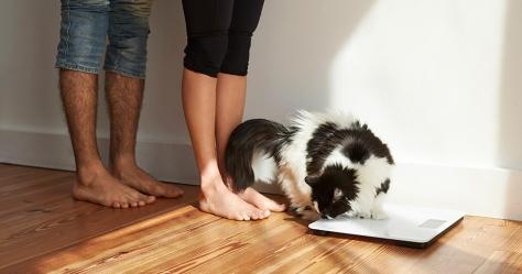 Las mejores básculas inteligentes para controlar tu peso